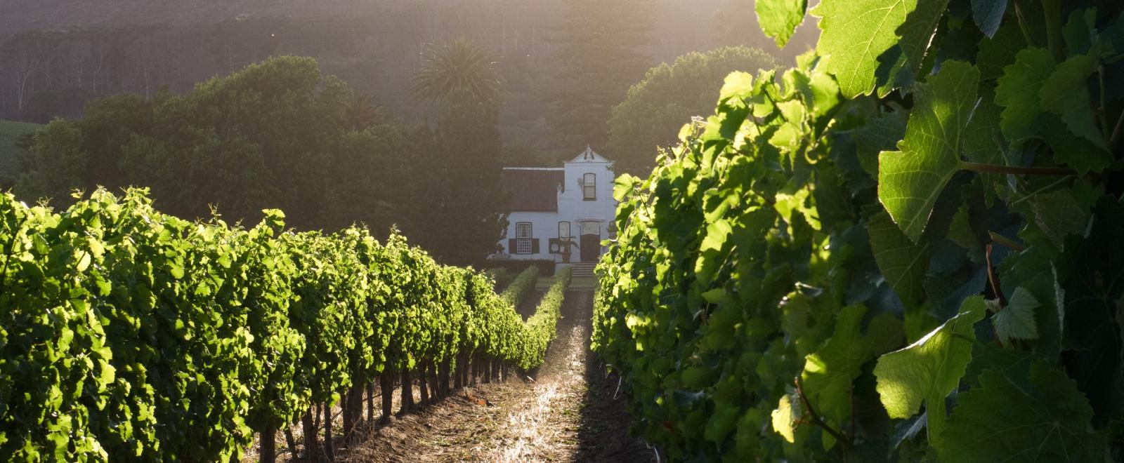 Learn about the ethical wine production in South Africa by visiting some of the wine farms in the Stellenbosch area.
